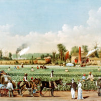 Cotton Plantation on the Mississippi, Currier & Ives, 1884